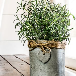 How To Make Concrete Pots For All Your Indoor Herbs